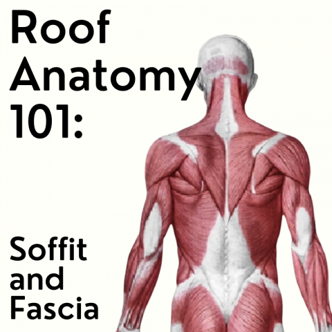 Roof Anatomy 101: Soffit and Fascia